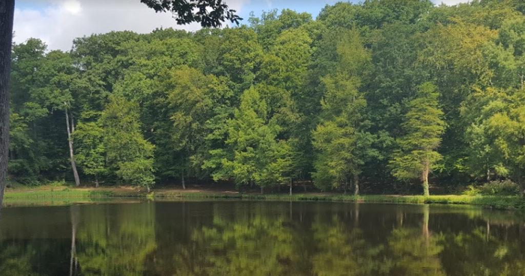 la forêt de Belleme