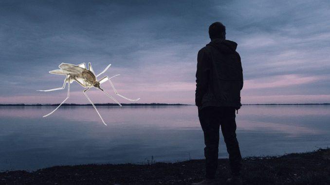 les solutions anti moustiques
